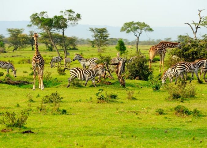 voyage sur mesure au Kenya