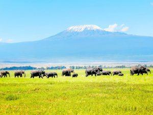 Les incontournables parcs à visiter lors d'un voyage sur mesure au Kenya